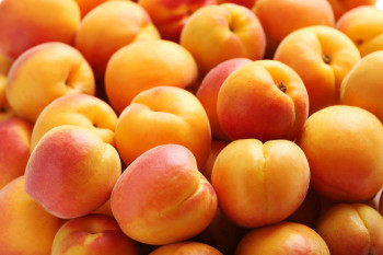 Abricot Extra
