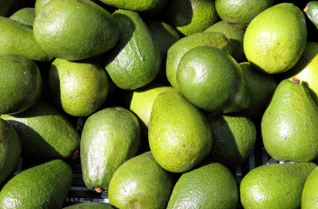 Avocat Tropical