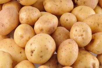 Pomme de Terre Bintje «spécial frites»