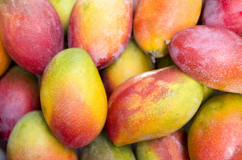 Mangue sauvage