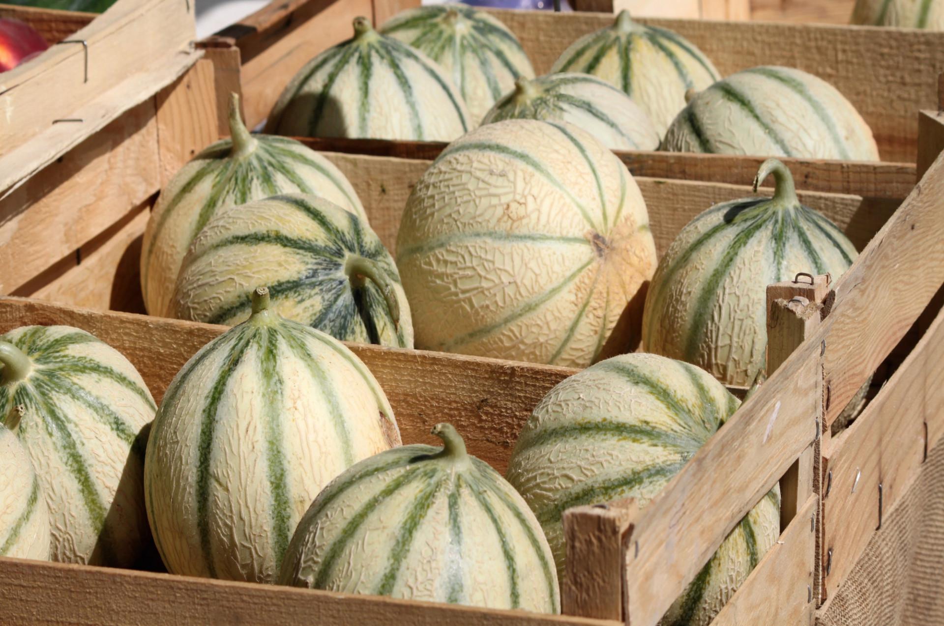 Melon gros
