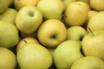 Pomme Chanteclerc/Belchard