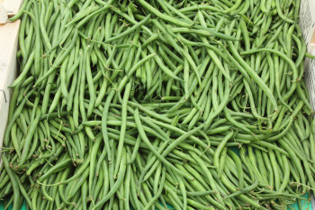 Haricot Vert Extra-Fin