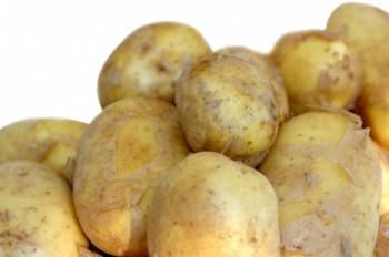 Pomme de Terre nouvelle «Bonnotte» de Noirmoutier en  bourriche