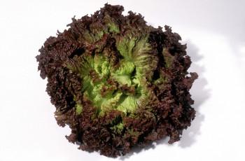 Salade Batavia Rouge