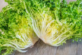 Salade Chicorée / Frisée