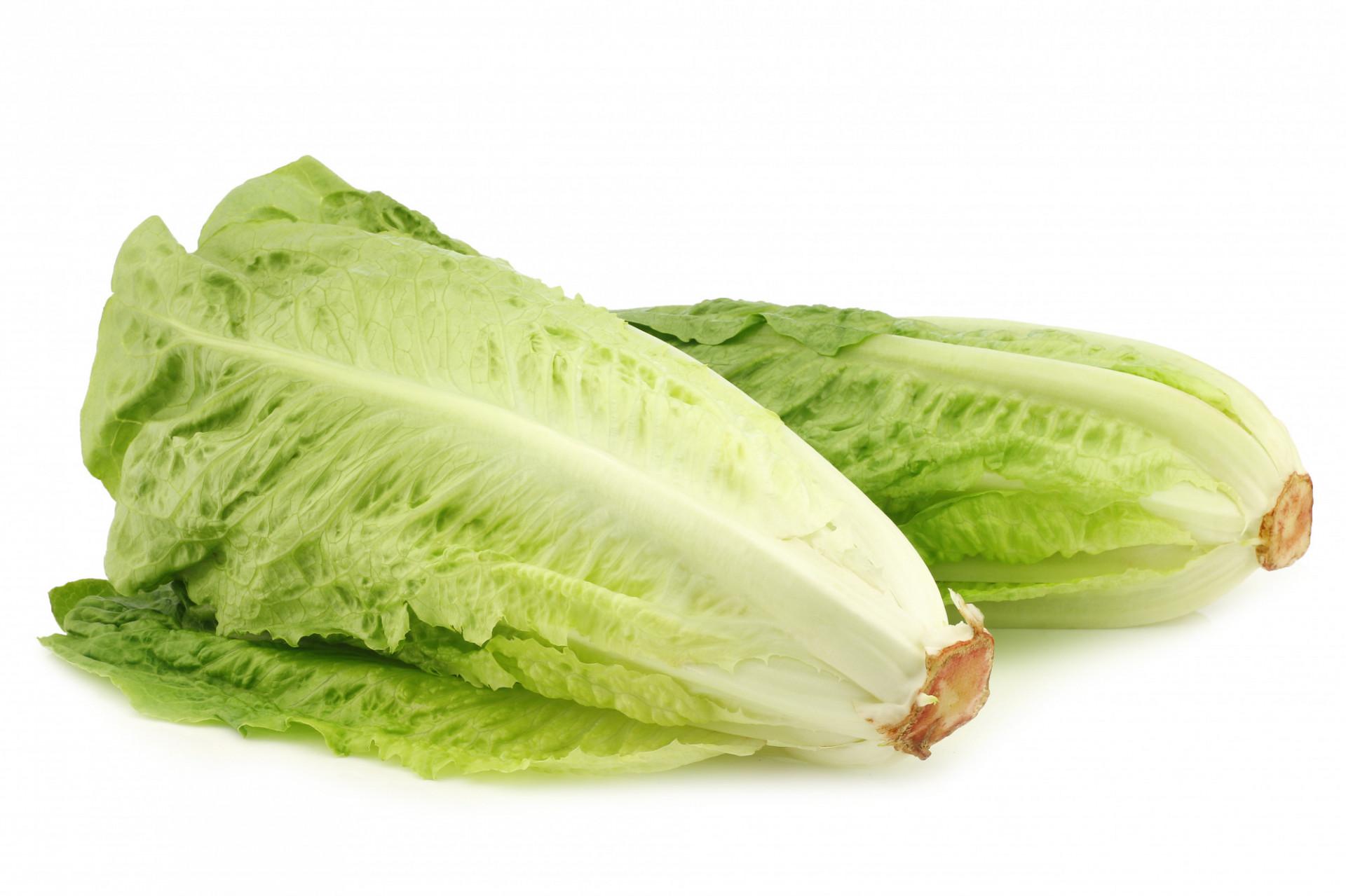 Salade Romaine X2