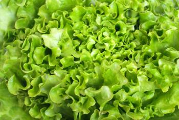 Salade Salanova Multifeuille