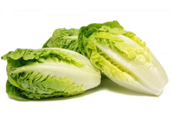 Salade Sucrine X 6
