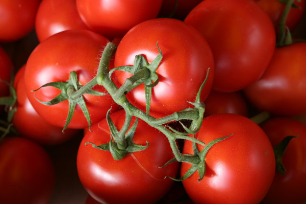 Tomate Ronde Extra en Grappe