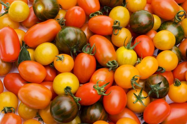 Tomate Cerise Méli-mélo de Couleur