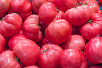 Tomate Cotelée type Ancienne Rose de Bern