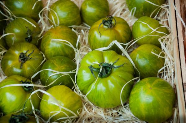 Tomate ronde Green Zebra