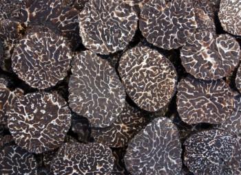 Truffe Noire «Tuber Mélanosporum»